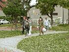 秋のクリーン運動を開催しました 1