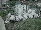 秋のクリーン運動を開催しました 7